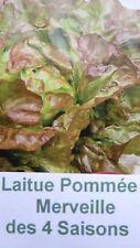 Salade semences Laitue pommée MERVEILLE DES 4 SAISONS  verte rouge brun bio