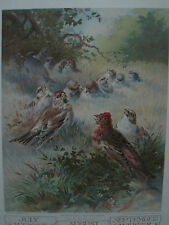 """ANTIQUE  LITHOGRAPH """" Morning Serenade"""" BY H. Giacomelli CALENDAR PAGE 1907"""