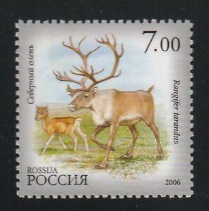 Deer,  Fawn,