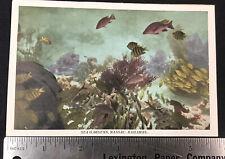 1930s NASSAU, BAHAMAS Postcard: Sea Garden / Tropical Fish / Coral ***RARE***