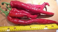 Cayenne Pepper- 35+ Us Seeds. Long, Red Chilis. Sweet & spicy. Organic, no-Gmo!