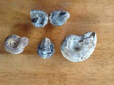 Fossil collection from grandma's estate. Ammonite & ?