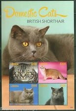 Liberia 2014 Domestic Cats British Shorthair Sheet Of Four Mint Nh