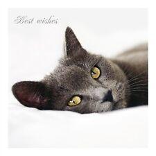 Despierten despierten Gato Gris tumbado gatos protección caridad mejores deseos Tarjeta En Blanco