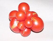 10 graines semences  tomate DU VOYAGEUR  ou du voyage  Seeds Economique