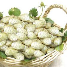Wild Strawberry White Soul Seeds white strawberry Ukraine 0.03 g garden idea