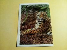 Figurina/Sticker BILLA DER TIERISCHEN REKORDE n°27 jaguar new