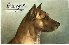 PORTRAIT DE CHIEN. DOG. HUNDE.