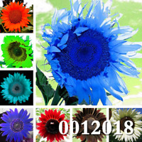 20 PCS Seeds Rare Color Sunflower Flowers Bonsai Plants Free Shipping 2019 New N