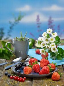 Strawberry Plants - Summer Breeze Snow x 9cm organic pots