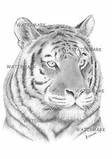 Hello Tiger. A3 Tiger Graphite Sketch (print)