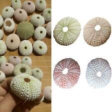 4 Pcs Natural Shells 4-6cm Sea Urchin Seashells Durable NEW Craft Decor UK