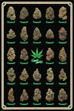 BEST BUDS MARIJUANA STRAINS ID CHART POSTER (61x91cm)  PICTURE PRINT NEW ART