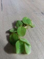 sale!Salvinia minima duckweed mix low light aquarium plant about 350 plants