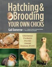 Hatching & Brooding Your Own Chicks: Chickens, Turkeys, Ducks, Geese, Guinea Fow