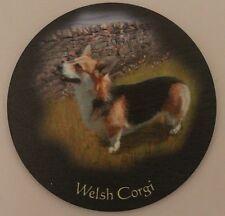Welsh Corgie Tri Colour - Dog - Coaster - Welsh Slate