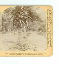B688 Littleton view 1660 Cocoanut Trees In The White Sands Of Florida D