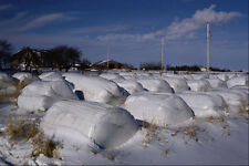 547091 balas de heno envuelto en plástico Nova Scotia Canadá A4 Foto Impresión
