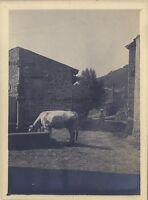Village? Piccardia Francia Belgium Bassi Vintage Analogica Ca 1900