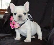 "Good Idea"" Dog Bulldog Drop Earrings Nwt Betsey Johnson ""Paris is Always a"