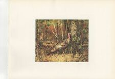 "1972 Vintage HUNTING ""WILD TURKEYS, 1971"" AWESOME FOREST SCENE Color Lithograph"