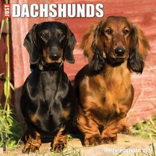 Just Dachshunds (dog breed calendar) 2021 Wall Calendar (Free Shipping)