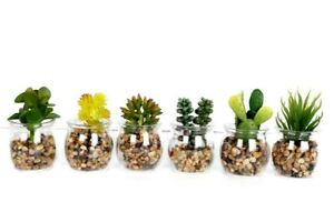 Artificial Succulent Plants In Glass Pot Cactus Cacti With Stones Set Of 6