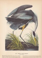"1942 Vintage AUDUBON BIRDS #211 ""GREAT BLUE HERON"" Color Art Plate Lithograph"