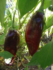 Guajillo Chile Pepper -a sweet,  tangy pepper for mole