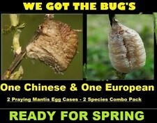 1 Chinese & 1 European Praying Mantis Egg Cases Natural Pest Control Combo Pack*