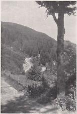 D8233 Campigna - Abetine e Faggete a Poggio Palaio - Stampa d'epoca - 1931 print