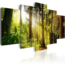 NATUR BAUM VOGEL Wandbilder xxl Bilder auf Vlies Leinwand Leinwandbilder 0108-3