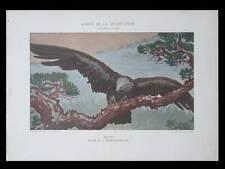 AIGLE, FRANCIS-AUBURTIN -1901- LITHOGRAPHIE, ART NOUVEAU