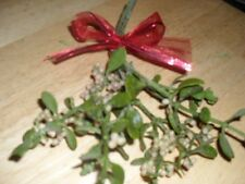 Fresh Holiday Oregon Mistletoe! Great for the holidays! 8th year!!