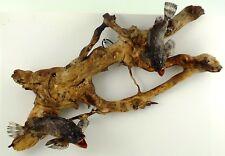 Real fish skin Mount Taxidermy fishing Black scorpionfish 2 pcs.