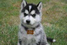 Hundemarken Hundemarke Tiermarke Adressanhänger Anhänger Incl. Gravur