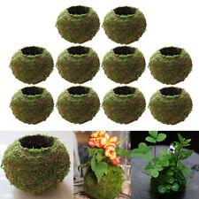 10xNatural Dry Moss Ball Bonsai Sphagnum Moss Planting Ball Flowerpot 9cm