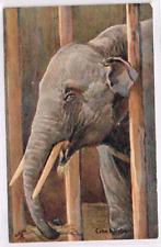 RAPHAEL TUCK - ANIMAL STUDIES - The Elephant  - Art Drawn - c1905