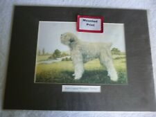 More details for soft-coated wheaten terrier, mounted dog print for framing