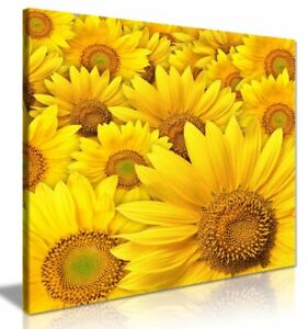 Yellow Sunflower Canvas Wall Art Picture Print