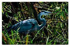 Great Blue Heron Postcard Everglades National Park Bird Vintage Unposted