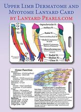 Upper Limb Dermatome + Myotome PVC Lanyard Card - Brachial Plexus Badge Card Arm