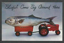 Ca 1948 PPC* NY LONG ISLAND BLUEFISH IN TOY TRACTOR COMES BIG AROUND HERE MINT
