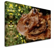 More details for irish red setter dog x-large 30