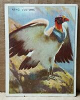 T29 Hassan Cigarettes King Vulture Card (B-3)