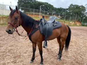 """Australian Stock Leather Horse Tack Saddle Seat Size 14""""-18.5"""" Free Shipping"""