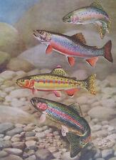 Rainbow, Golden Trout etc. by Walt Weber