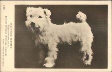 Sealyham Terrier Dog c1910 Postcard