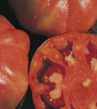 TOMATE MONTSERRAT 300 Semillas Seeds