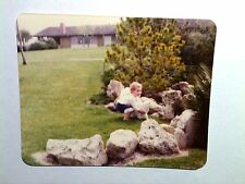 Vintage 70s Photo Little Girl Cuffed Jeans Holding Big White Cat Outdoors Lawn